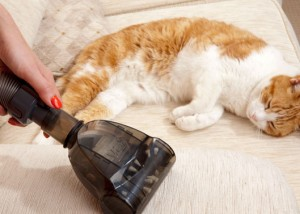 Product Photography | Vaccum Accessory with Cat