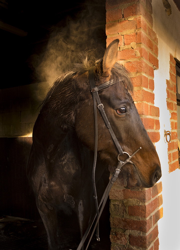 Location Photographer Worcester- Horse in stable- dpix creative photography